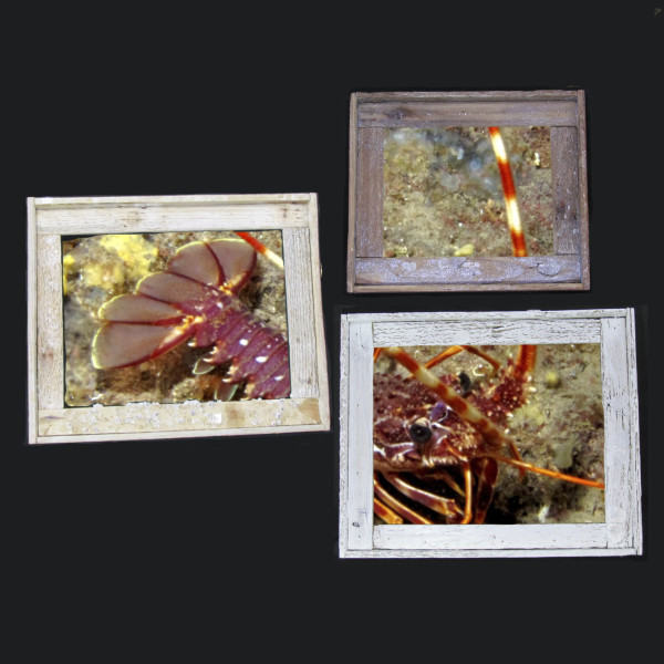 Lobster Trap Picture Frames | Key West / Florida Keys Money Saving Discount Coupons